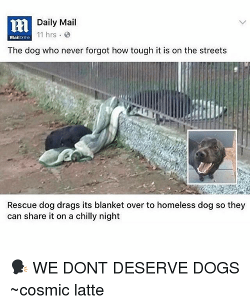 Dogs, Homeless, and Memes: Daily Mail  11 hrs  mailonihe  The dog who never forgot how tough it is on the streets  Rescue dog drags its blanket over to homeless dog so they  can share it on a chilly night 🗣 WE DONT DESERVE DOGS ~cosmic latte