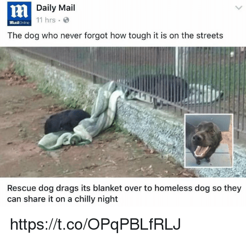 Daily Mail Online: Daily Mail 11 Hrs MailOnline The Dog Who Never Forgot How