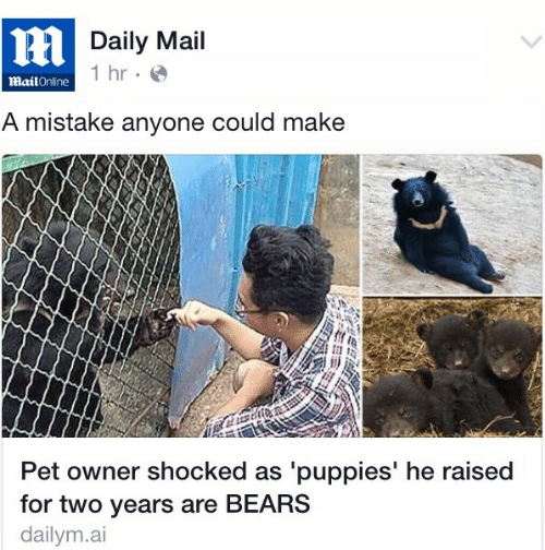 Puppies, Bears, and Daily Mail: Daily Mail  hr.  MailOnline  A mistake anyone could make  Pet owner shocked as 'puppies' he raised  for two years are BEARS  dailym.ai
