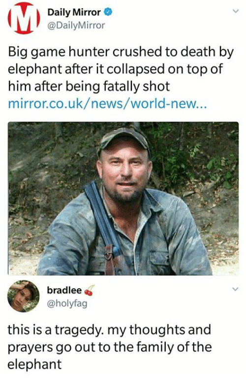 Family, Memes, and News: Daily Mirror  @DailyMirror  Big game hunter crushed to death by  elephant after it collapsed on top of  him after being fatally shot  mirror.co.uk/news/world-new...  bradlee  @holyfag  this is a tragedy. my thoughts and  prayers go out to the family of the  elephant