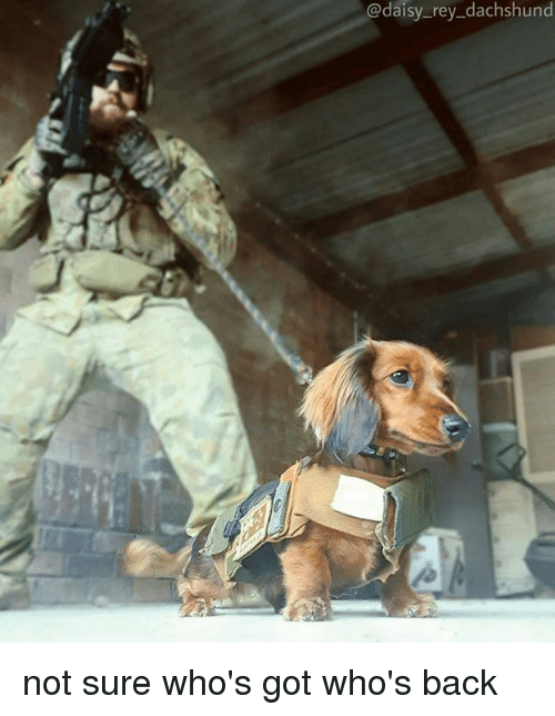 Memes, Rey, and Back: @daisy_rey_dachshund not sure who's got who's back