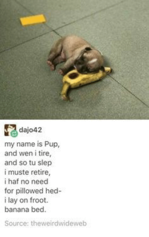 Banana, Pup, and Source: dajo42  my name is Pup,  and wen i tire,  and so tu slep  i muste retire,  i haf no need  for pillowed hed-  i lay on froot  banana bed.  Source: theweirdwideweb