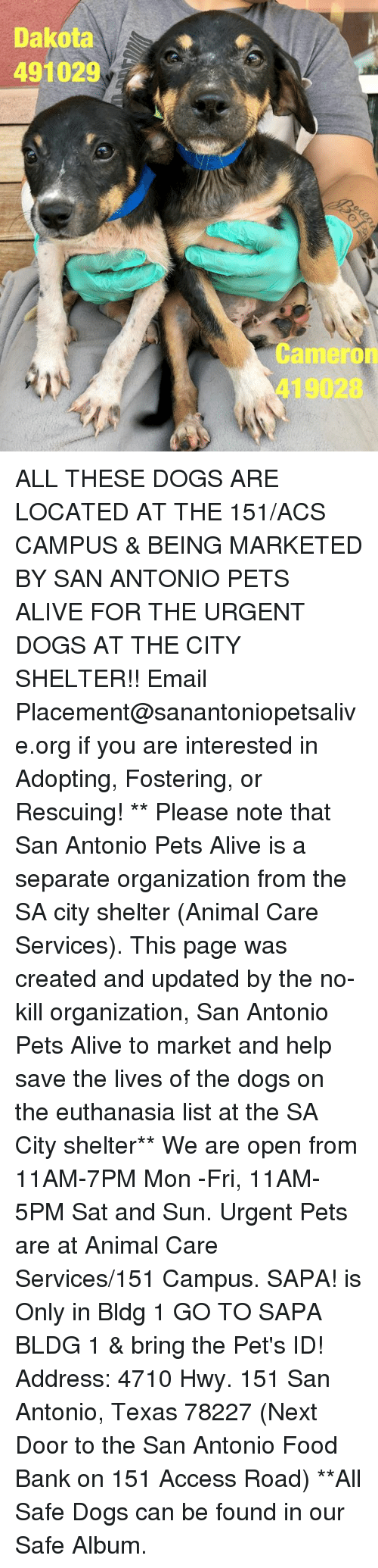 Alive, Dogs, and Food: Dakota  491029  Cameron  419028 ALL THESE DOGS ARE LOCATED AT THE 151/ACS CAMPUS & BEING MARKETED BY SAN ANTONIO PETS ALIVE FOR THE URGENT DOGS AT THE CITY SHELTER!!  Email Placement@sanantoniopetsalive.org if you are interested in Adopting, Fostering, or Rescuing!                                                                                                                                                                                                                                                                                                                                                             ** Please note that San Antonio Pets Alive is a separate organization from the SA city shelter (Animal Care Services). This page was created and updated by the no-kill organization, San Antonio Pets Alive to market and help save the lives of the dogs on the euthanasia list at the SA City shelter**  We are open from 11AM-7PM Mon -Fri, 11AM-5PM Sat and Sun. Urgent Pets are at Animal Care Services/151 Campus. SAPA! is Only in Bldg 1 GO TO SAPA BLDG 1 & bring the Pet's ID! Address: 4710 Hwy. 151 San Antonio, Texas 78227 (Next Door to the San Antonio Food Bank on 151 Access Road) **All Safe Dogs can be found in our Safe Album.