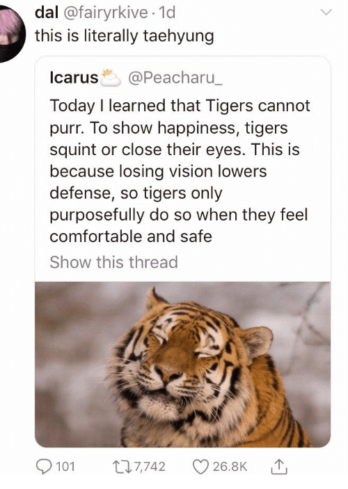 Comfortable, Vision, and Tigers: dal @fairyrkive 1d  this is literally taehyung  Icarus @Peacharu  Today I learned that Tigers cannot  purr. To show happiness, tigers  squint or close their eyes. This is  because losing vision lowers  defense, so tigers only  purposefully do so when they feel  comfortable and safe  Show this thread  101 7742 26.8K