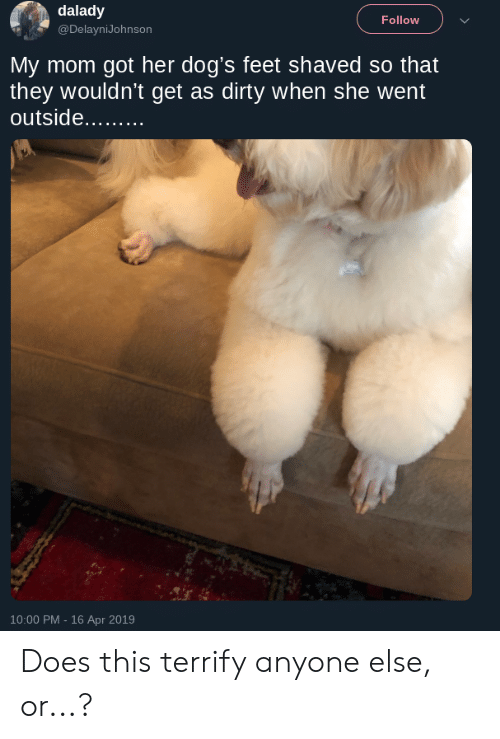 Dogs, Reddit, and Dirty: dalady  @DelayniJohnson  Follow  My mom got her dog's feet shaved so that  they wouldn't get as dirty when she went  10:00 PM - 16 Apr 2019 Does this terrify anyone else, or...?