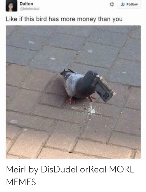 Dank, Memes, and Money: Dalton  @Intellectal  # Follow  Like if this bird has more money than you Meirl by DisDudeForReal MORE MEMES