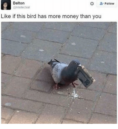 Memes, Money, and 🤖: Dalton  # L. Follow  ntellectral  Like if this bird has more money than you