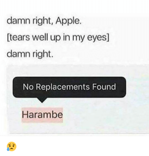 Apple, Memes, and Harambe: damn right, Apple.  tears well up in my eyes]  damn right.  No Replacements Found  Harambe 😥