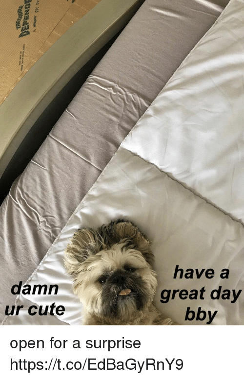 Cute, Girl Memes, and Open: damn  ur cute  have a  great day  bby open for a surprise https://t.co/EdBaGyRnY9