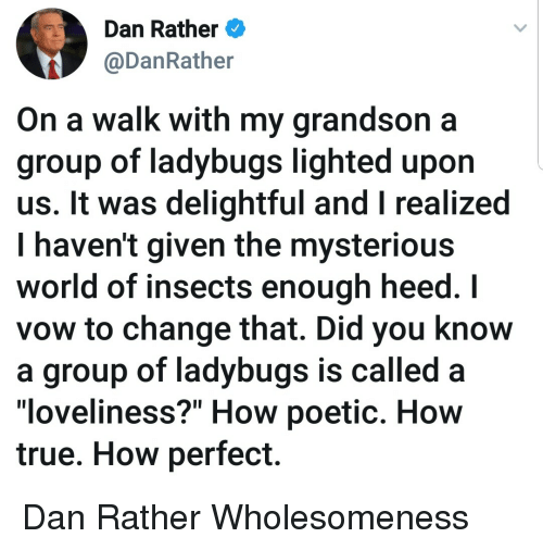 """True, World, and Poetic: Dan Rather  @DanRather  On a walk with my grandson a  group of ladybugs lighted upon  us. It was delightful and I realized  I haven't given the mysteriou:s  world of insects enough heed. I  vow to change that. Did you know  a group of ladybugs is called a  loveliness?"""" How poetic. Hovw  true. How perfect. Dan Rather Wholesomeness"""