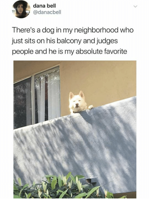 Dank, 🤖, and Dog: dana bell  @danacbell  There's a dog in my neighborhood who  just sits on his balcony and judges  people and he is my absolute favorite
