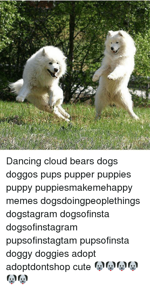 Dancing Cloud Bears Dogs Doggos Pups Pupper Puppies Puppy