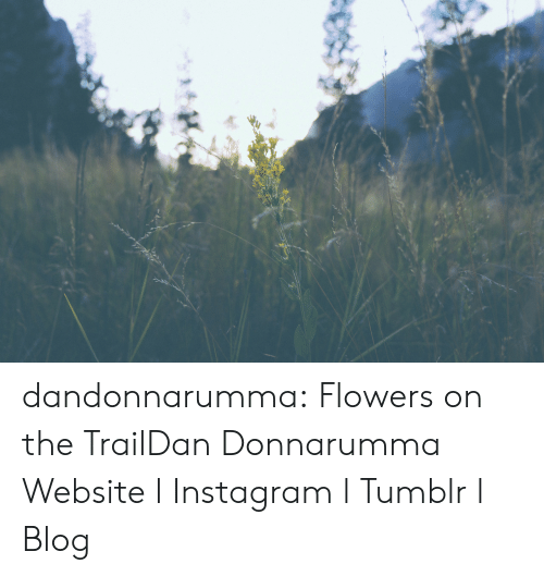 Instagram, Target, and Tumblr: dandonnarumma:  Flowers on the TrailDan Donnarumma Website l Instagram l Tumblr l Blog