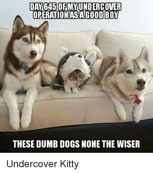 Danga50fmmundercover Operation As Agood Boy These Dumb Dogs None The