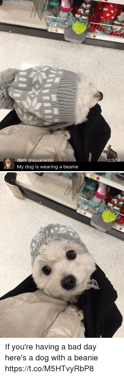 Bad, Bad Day, and Relatable: dani a aquarianbb  My dog is wearing a beanie  12/3/16 If you're having a bad day here's a dog with a beanie https://t.co/M5HTvyRbP8
