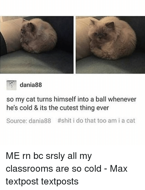 Memes, Shit, and Cold: dania88  so my cat turns himself into a ball whenever  he's cold & its the cutest thing ever  Source: dania88 #shit i do that too am i a cat ME rn bc srsly all my classrooms are so cold - Max textpost textposts