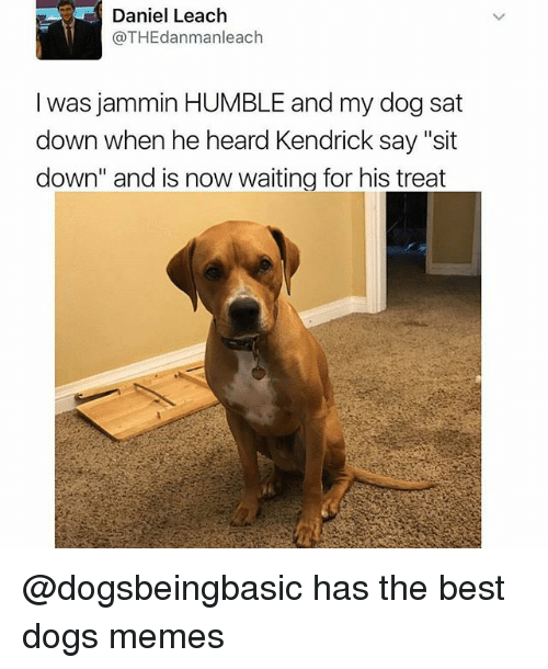 "Dogs, Funny, and Memes: Daniel Leach  @THEdanmanleach  was jammin HUMBLE and my dog sat  down when he heard Kendrick say ""sit  down"" and is now waiting for his treat @dogsbeingbasic has the best dogs memes"