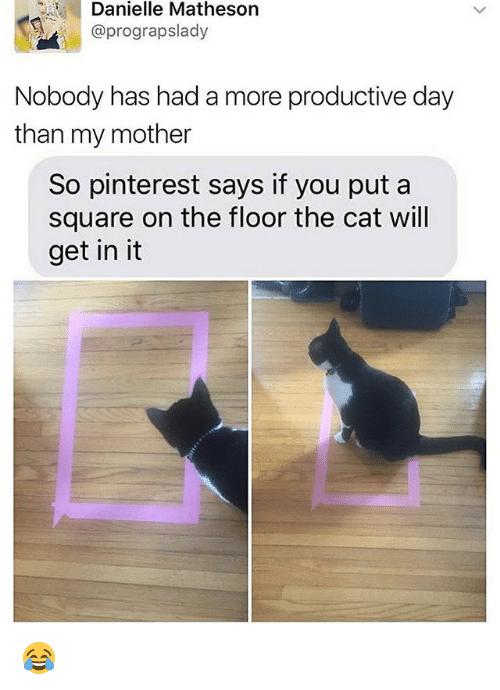 Memes, Pinterest, and Square: Danielle Matheson  @prograpslady  Nobody has had a more productive day  than my mother  So pinterest says if you put a  square on the floor the cat will  get in it 😂