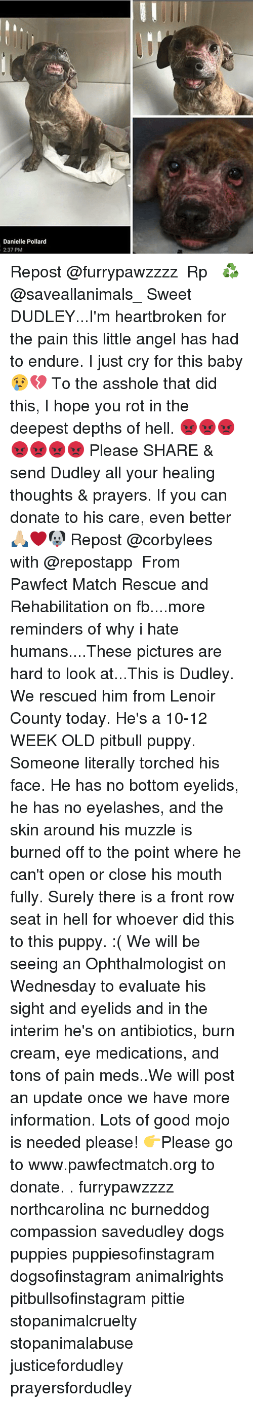 Memes, Pitbull, and Front Row: Danielle Pollard  2:37 PM Repost @furrypawzzzz ・・・ Rp♻️ @saveallanimals_ Sweet DUDLEY...I'm heartbroken for the pain this little angel has had to endure. I just cry for this baby 😢💔 To the asshole that did this, I hope you rot in the deepest depths of hell. 😡😡😡😡😡😡😡 Please SHARE & send Dudley all your healing thoughts & prayers. If you can donate to his care, even better 🙏🏼❤🐶 Repost @corbylees with @repostapp ・・・ From Pawfect Match Rescue and Rehabilitation on fb....more reminders of why i hate humans....These pictures are hard to look at...This is Dudley. We rescued him from Lenoir County today. He's a 10-12 WEEK OLD pitbull puppy. Someone literally torched his face. He has no bottom eyelids, he has no eyelashes, and the skin around his muzzle is burned off to the point where he can't open or close his mouth fully. Surely there is a front row seat in hell for whoever did this to this puppy. :( We will be seeing an Ophthalmologist on Wednesday to evaluate his sight and eyelids and in the interim he's on antibiotics, burn cream, eye medications, and tons of pain meds..We will post an update once we have more information. Lots of good mojo is needed please! 👉Please go to www.pawfectmatch.org to donate. . furrypawzzzz northcarolina nc burneddog compassion savedudley dogs puppies puppiesofinstagram dogsofinstagram animalrights pitbullsofinstagram pittie stopanimalcruelty stopanimalabuse justicefordudley prayersfordudley