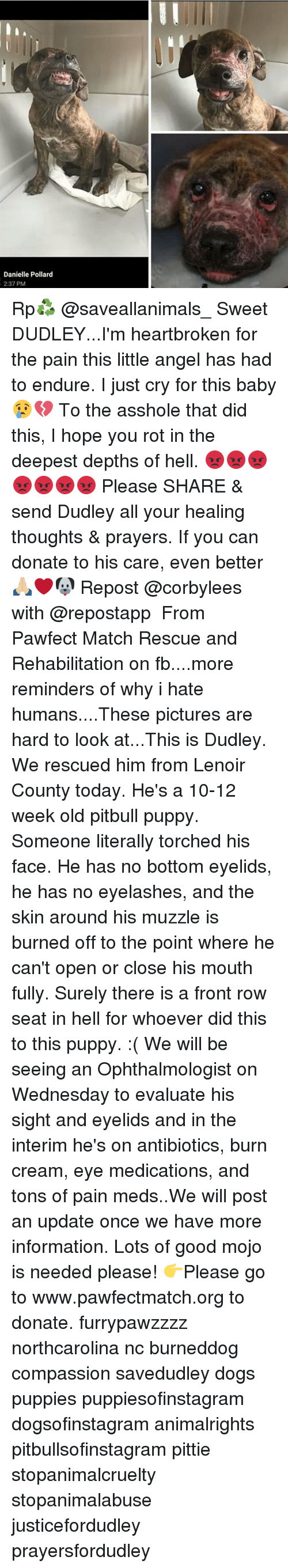 Memes, Pitbull, and Front Row: Danielle Pollard  2:37 PM Rp♻️ @saveallanimals_ Sweet DUDLEY...I'm heartbroken for the pain this little angel has had to endure. I just cry for this baby 😢💔 To the asshole that did this, I hope you rot in the deepest depths of hell. 😡😡😡😡😡😡😡 Please SHARE & send Dudley all your healing thoughts & prayers. If you can donate to his care, even better 🙏🏼❤🐶 Repost @corbylees with @repostapp ・・・ From Pawfect Match Rescue and Rehabilitation on fb....more reminders of why i hate humans....These pictures are hard to look at...This is Dudley. We rescued him from Lenoir County today. He's a 10-12 week old pitbull puppy. Someone literally torched his face. He has no bottom eyelids, he has no eyelashes, and the skin around his muzzle is burned off to the point where he can't open or close his mouth fully. Surely there is a front row seat in hell for whoever did this to this puppy. :( We will be seeing an Ophthalmologist on Wednesday to evaluate his sight and eyelids and in the interim he's on antibiotics, burn cream, eye medications, and tons of pain meds..We will post an update once we have more information. Lots of good mojo is needed please! 👉Please go to www.pawfectmatch.org to donate. furrypawzzzz northcarolina nc burneddog compassion savedudley dogs puppies puppiesofinstagram dogsofinstagram animalrights pitbullsofinstagram pittie stopanimalcruelty stopanimalabuse justicefordudley prayersfordudley