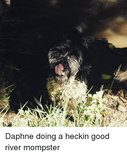 Good, River, and Daphne