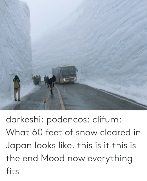 Mood, Tumblr, and Blog: darkeshi:  podencos:  clifum:  What 60 feet of snow cleared in Japan looks like. this is it this is the end  Mood  now everything fits