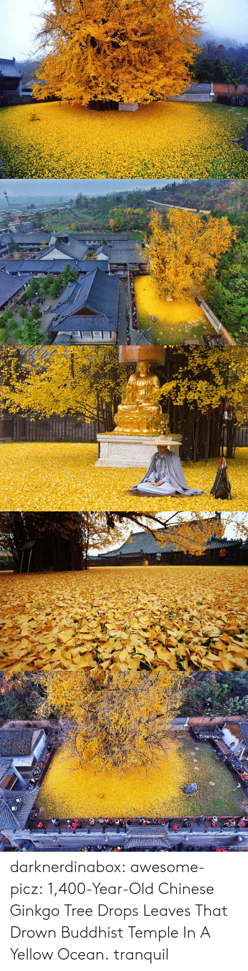 Tumblr, Blog, and Chinese: darknerdinabox:  awesome-picz:    1,400-Year-Old Chinese Ginkgo Tree Drops Leaves That Drown Buddhist Temple In A Yellow Ocean.  tranquil