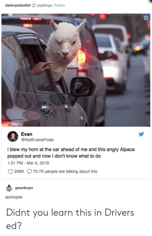 Angry, Alpaca, and Car: darkxyzduelistjaybingu Follow  Evan  @NotEvansPosts  i blew my horn at the car ahead of me and this angry Alpaca  popped out and now I don't know what to do  1:51 PM- Mar 5, 2018  208K 70.7K people are talking about this  geardrops  apologise Didnt you learn this in Drivers ed?
