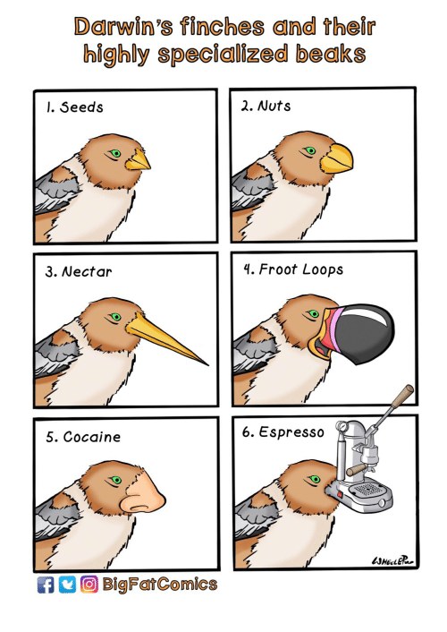 Cocaine, Espresso, and Seeds: Darwin's finches and their  highly specialized beaks  l. Seeds  2. Nuts  3. Nectar  4. Froot Loops  5. Cocaine  6. Espresso  WHEELER  BigFatComics
