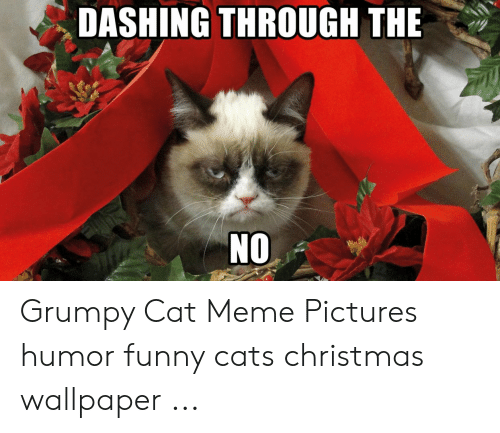 Funny Grumpy Cat Christmas Memes.Dashing Through The No Grumpy Cat Meme Pictures Humor Funny