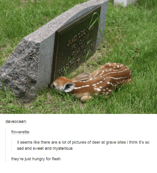 dave ocean flower ette it seems like there are a 1978962 ✅ 25 best memes about pictures of deer pictures of deer memes,Funny Deer Memes