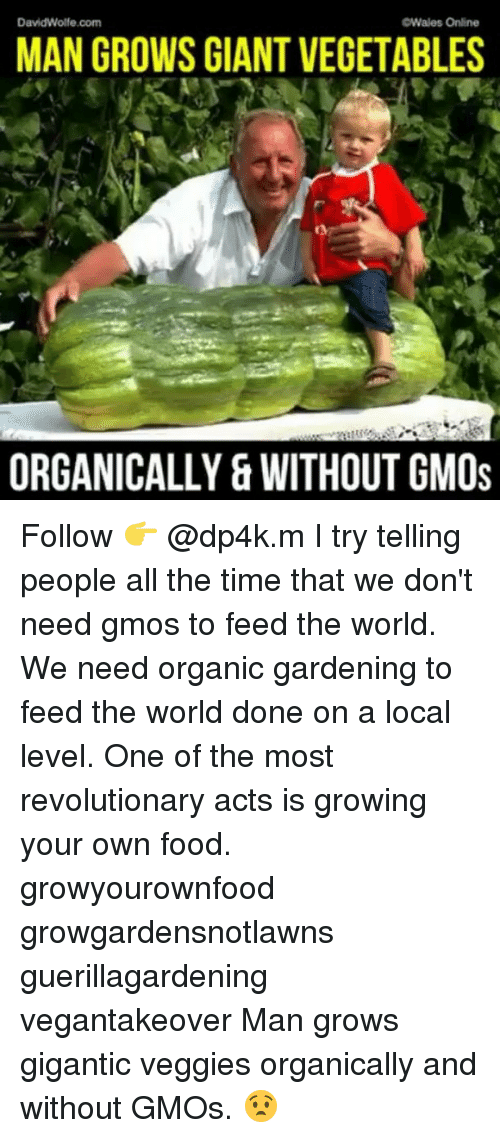 Food, Memes, and Giant: DavidWolfe.com  Wales Online  MAN GROWS GIANT VEGETABLES  ORGANICALLY & WITHOUT GMOs Follow 👉 @dp4k.m I try telling people all the time that we don't need gmos to feed the world. We need organic gardening to feed the world done on a local level. One of the most revolutionary acts is growing your own food. growyourownfood growgardensnotlawns guerillagardening vegantakeover Man grows gigantic veggies organically and without GMOs. 😧