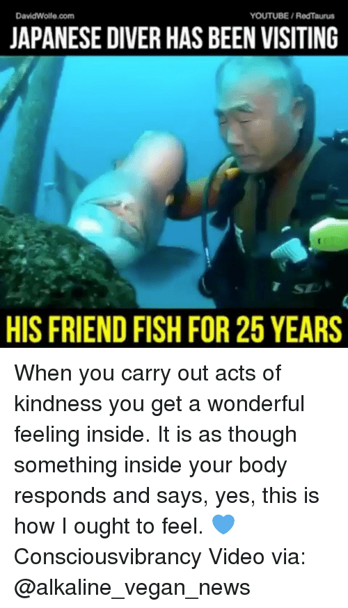 Memes, News, and Vegan: DavidWolle.com  YOUTUBE/RedTaurus  JAPANESE DIVER HAS BEEN VISITING  SE  HIS FRIEND FISH FOR 25 YEARS When you carry out acts of kindness you get a wonderful feeling inside. It is as though something inside your body responds and says, yes, this is how I ought to feel. 💙 Consciousvibrancy Video via: @alkaline_vegan_news