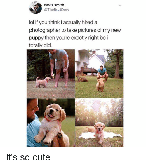 Cute, Lol, and Memes: davis smith  @TheRealDerv  lol if you think i actually hired a  photographer to take pictures of my new  puppy then you're exactly right bc i  totally did. It's so cute
