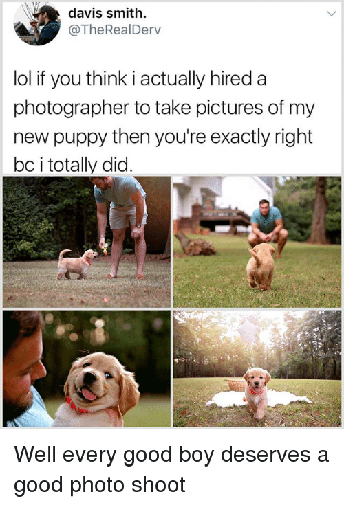 Lol, Memes, and Good: davis smith.  @TheRealDerv  lol if you think i actually hired a  photographer to take pictures of my  new puppy then you're exactly right  bc i totally did Well every good boy deserves a good photo shoot
