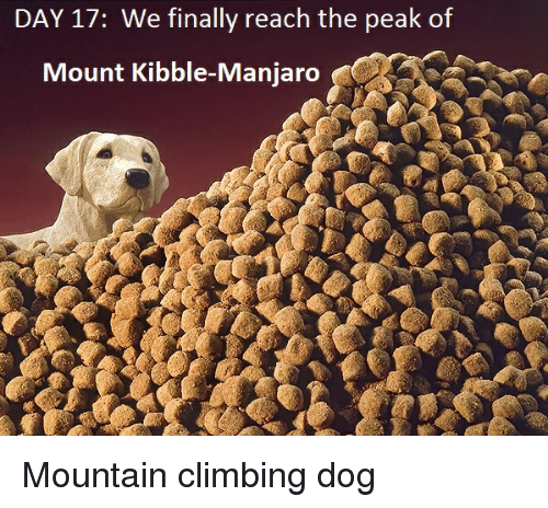 DAY 17 We Finally Reach the Peak of Mount Kibble-Manjaro Mountain