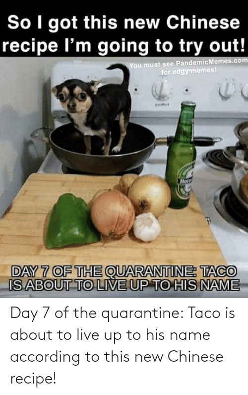 Chinese, Live, and According: Day 7 of the quarantine: Taco is about to live up to his name according to this new Chinese recipe!