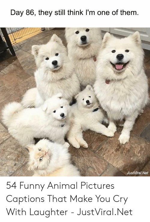 Funny, Animal, and Pictures: Day 86, they still think I'm one of them  JustViral Net 54 Funny Animal Pictures Captions That Make You Cry With Laughter - JustViral.Net