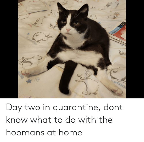 Home, Quarantine, and Day: Day two in quarantine, dont know what to do with the hoomans at home