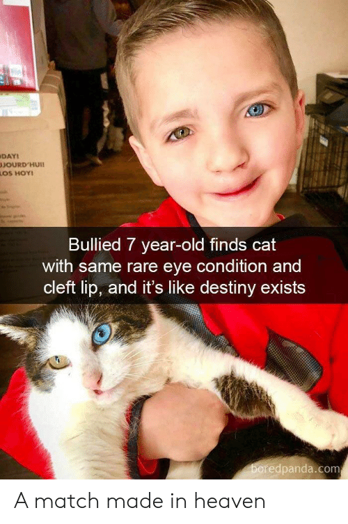 Destiny, Heaven, and Match: DAYI  SOURD'HUI  OS HOY  Bullied 7 year-old finds cat  with same rare eye condition and  cleft lip, and it's like destiny exists  edpanda.com A match made in heaven