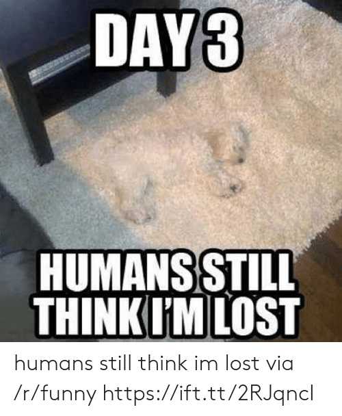 Funny, Lost, and Via: DAYS  HUMANS STILL  THINKIM LOST humans still think im lost via /r/funny https://ift.tt/2RJqncI