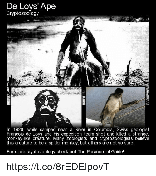 De Loys' Ape Cryptozoology in 1920 While Camped Near a River in