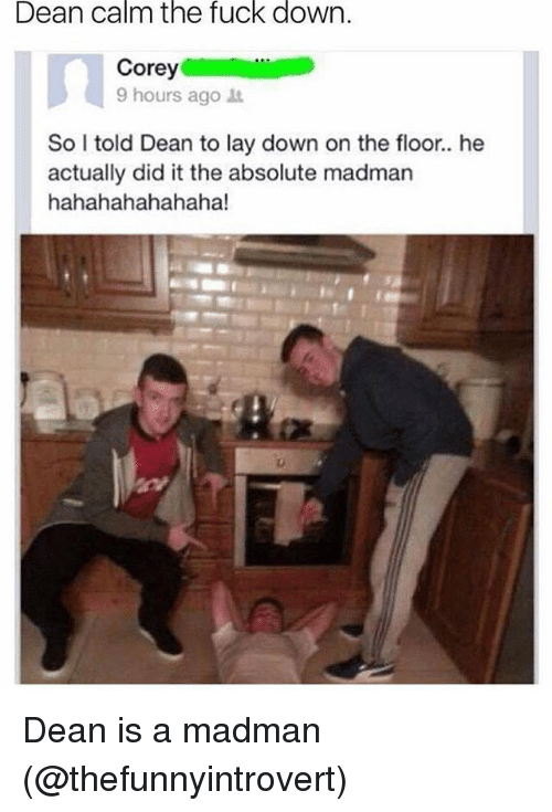 Memes, Fuck, and 🤖: Dean calm the fuck down.  9 hours ago  So I told Dean to lay down on the floor.. he  actually did it the absolute madman  hahahahahahaha! Dean is a madman (@thefunnyintrovert)