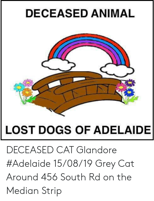 Dogs, Memes, and Lost: DECEASED ANIMAL  LOST DOGS OF ADELAIDE DECEASED CAT Glandore #Adelaide 15/08/19 Grey Cat Around 456 South Rd on the Median Strip