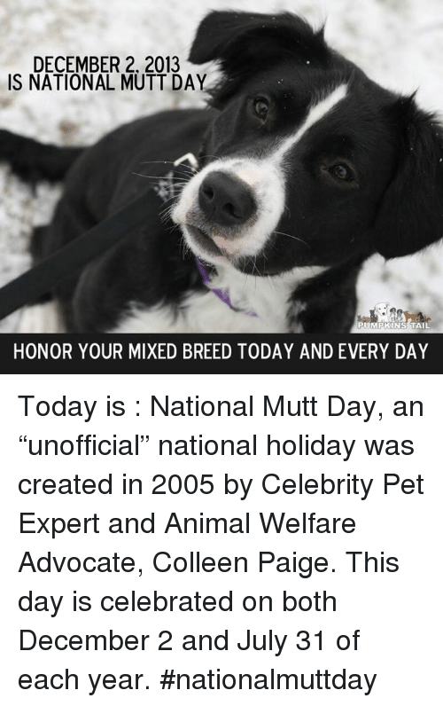 """Memes, Animal, and Today: DECEMBER 2, 2013  IS NATIONAL MUTT DAY  PUMPKINS TAIL  HONOR YOUR MIXED BREED TODAY AND EVERY DAY Today is : National Mutt Day, an """"unofficial"""" national holiday was created in 2005 by Celebrity Pet Expert and Animal Welfare Advocate, Colleen Paige. This day is celebrated on both December 2 and July 31 of each year. #nationalmuttday"""