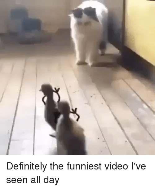 Definitely, Memes, and Video: Definitely the funniest video I've seen all day