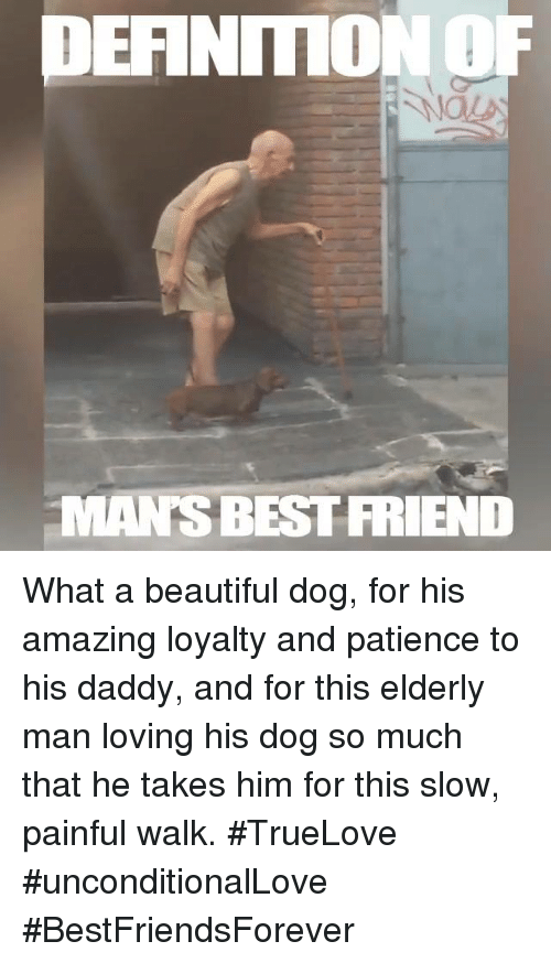 Memes, Patience, and 🤖: DEFINITION OF  MANS BEST FRIEND What a beautiful dog, for his amazing loyalty and patience to his daddy, and  for this elderly man loving his dog so much that he takes him for this slow, painful walk. #TrueLove #unconditionalLove #BestFriendsForever