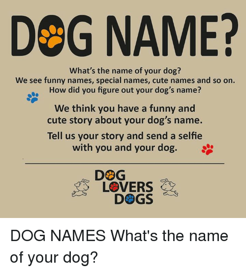 DeG NAME? What's the Name of Your Dog? We See Funny Names Special