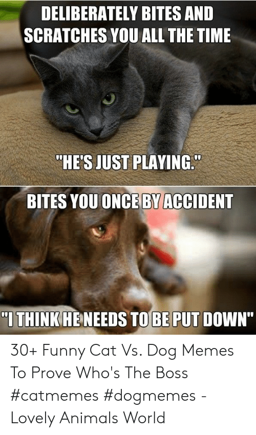 "Animals, Funny, and Memes: DELIBERATELY BITES AND  SCRATCHES YOU ALL THE TIME  ""HE'S JUST PLAYING.  BITES YOUONCE BY ACCIDENT  I THINK HENEEDS TOBE PUT DOWN"" 30+ Funny Cat Vs. Dog Memes To Prove Who's The Boss #catmemes #dogmemes - Lovely Animals World"