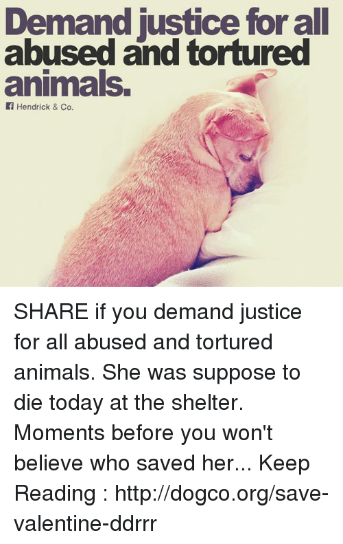 Animals, Memes, and Http: Demand justice for all  abused and tortured  animals.  Hendrick & Co. SHARE if you demand justice for all abused and tortured animals.  She was suppose to die today at the shelter. Moments before you won't believe who saved her... Keep Reading : http://dogco.org/save-valentine-ddrrr